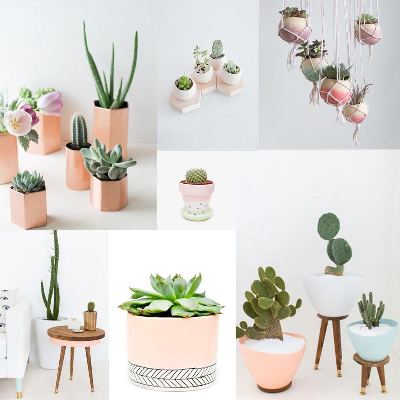 Dans la vie il y a des cactus dracipana